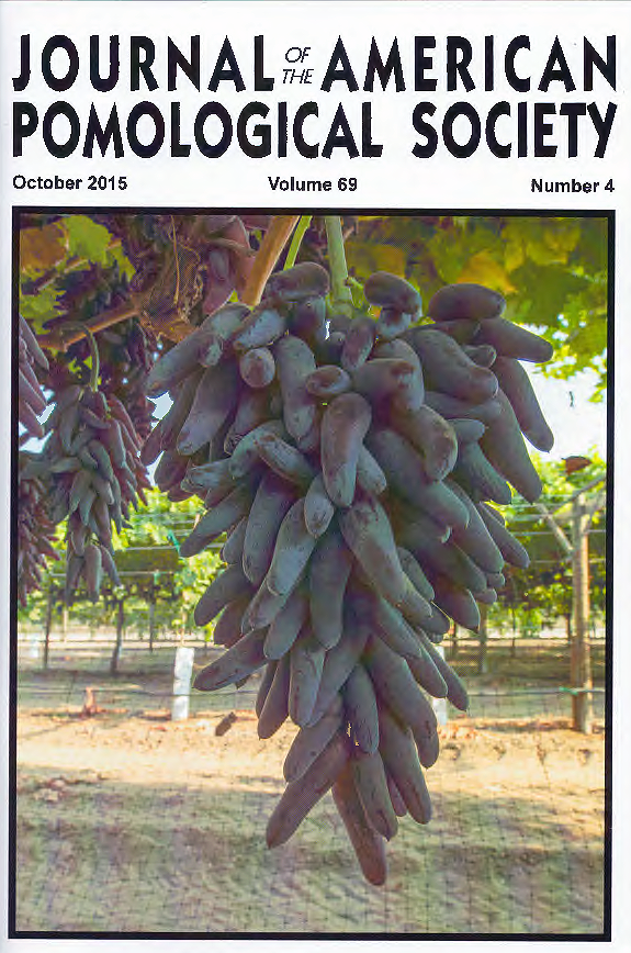 Funny Fingers (r) table grape was bred by Dr. David Cain of  International Fruit Genetics in cooperation with Dr. John Clark from the University of Arkansas. It is marketed under the name Witch Fingers (TM) by Grapery in California, USA.